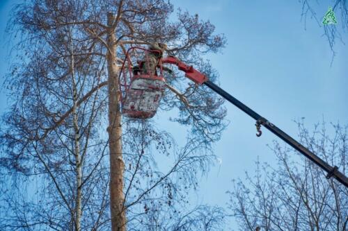 4 аварийных сухостойных дерева удалены